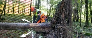 9 Necessary Techniques Using A Chainsaw In Order To Clear Debris